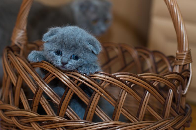 Котёнок в корзине