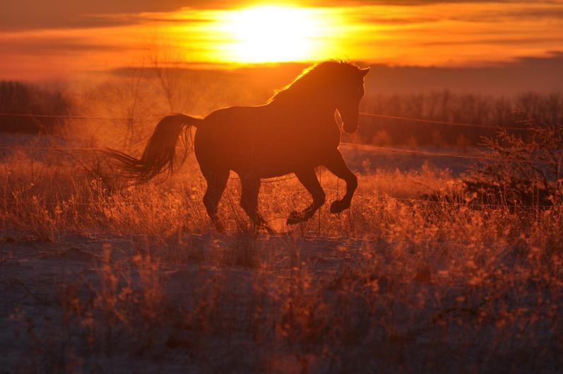 Конь на рассвете