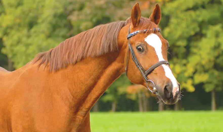 В тушенке нашли ДНК лошади
