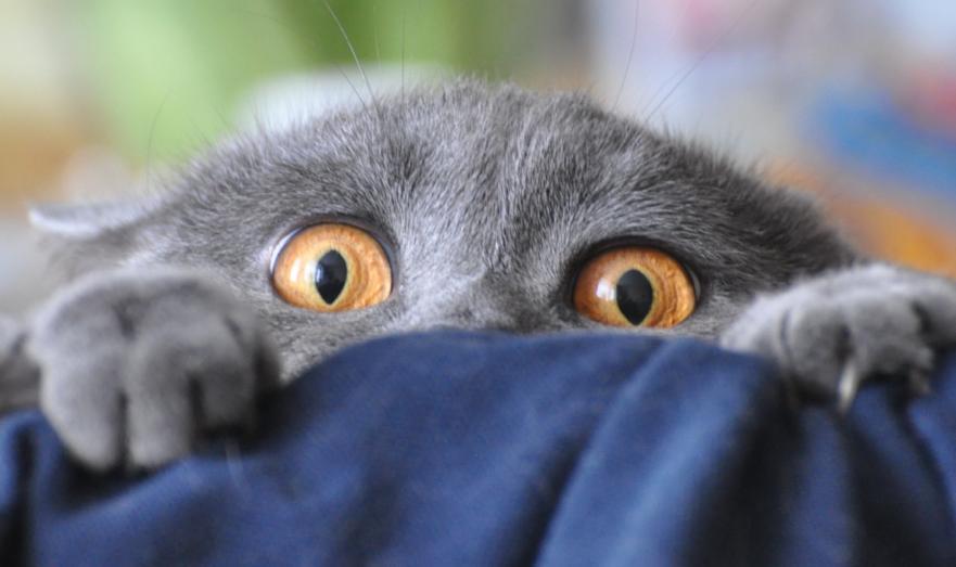 Коты в ужасе