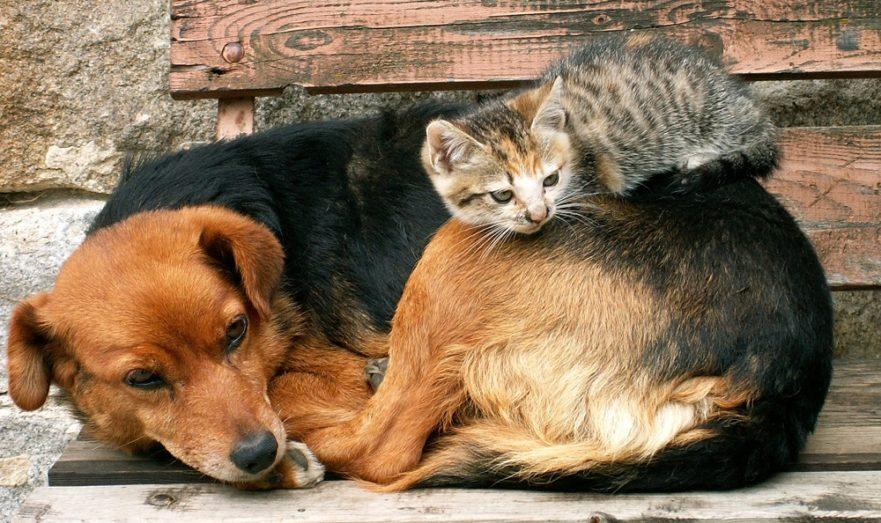 квоты животные