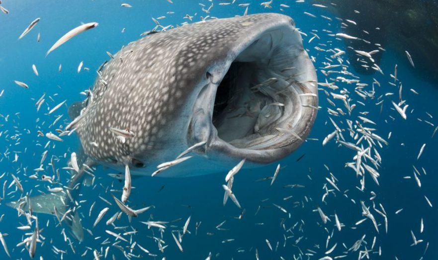 Крупная рыба пожрёт мелкую