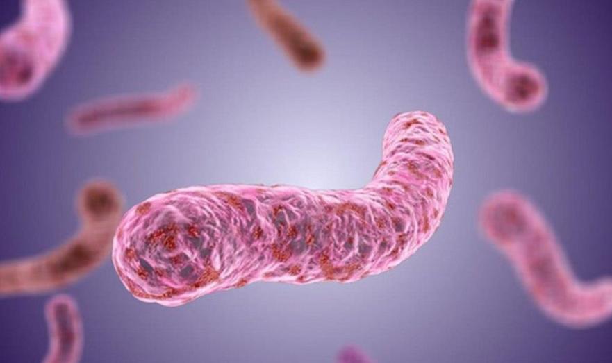 Микобактерии туберкулеза.