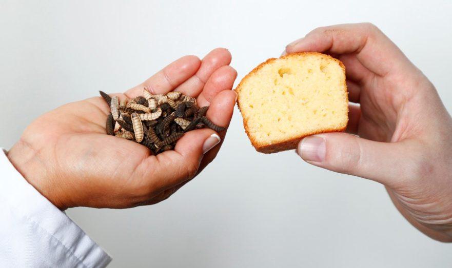 Диетолог рассказал, кто будет питаться мясом и хлебом из насекомых