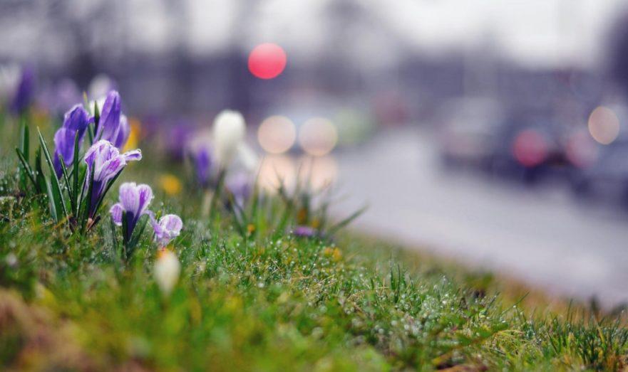 Чем опасны скачки природы весной