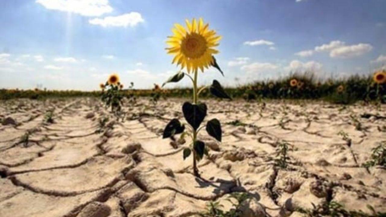 Россиян предупредили о приближении засухи – ОСН