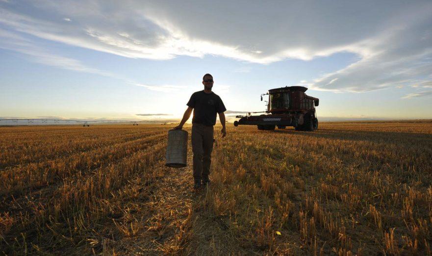 Россия планирует передать Узбекистану в аренду сельхозземли